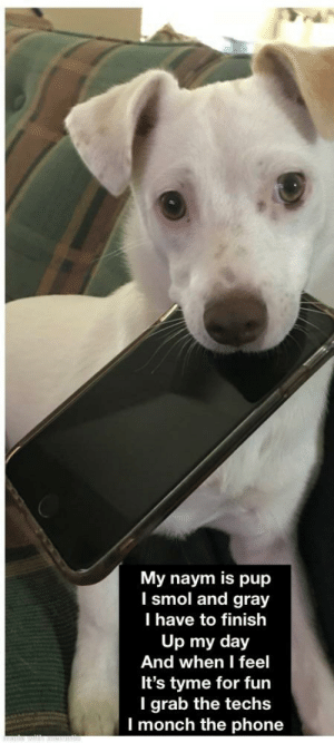 Phone, Pup, and Fun: My naym is pup  I smol and gray  T have to finish  Up my day  And when I feel  It's tyme for fun  I grab the techs  I monch the phone Tiny pup