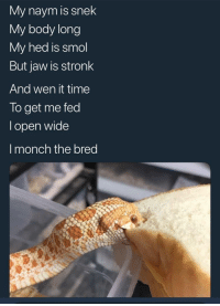 Cute, Time, and How: My naym is snek  My body long  My hed is smol  But jaw is stronk  And wen it time  To get me fed  l open wide  I monch the bred How cute