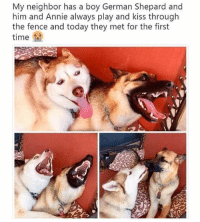 We've got memes comin' through! #RandomMemes #Cute #Aww #DogMemes #CuteDogs: My neighbor has a boy German Shepard and  him and Annie always play and kiss through  the et for the first  fence and today they m  time fa We've got memes comin' through! #RandomMemes #Cute #Aww #DogMemes #CuteDogs
