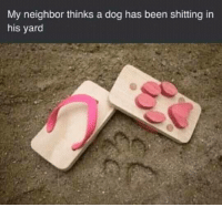 Memes, Been, and 🤖: My neighbor thinks a dog has been shitting in  his yard Snag some dankness at dankmemesgang.com 😂😂👌👌