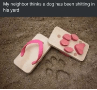 Life, Memes, and Life Hack: My neighbor thinks a dog has been shitting in  his yard life hack 37.B via /r/memes https://ift.tt/2zt95KJ