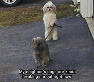 30+ Funny Animal Memes To Make You Laugh Till You Drop - Lovely Animals World: My neighbor's dogs are kinda  freaking me out right now 30+ Funny Animal Memes To Make You Laugh Till You Drop - Lovely Animals World