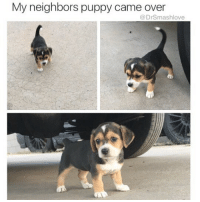 """Head, Life, and Low Key: My neighbors puppy came over  @DrSmashlove When u show up to her crib and the plan was to head out to dinner but she answer the door Bucky nekky and she just like """"I snacked earlier I'm good 🤓"""" and u realize that this shit was never about dinner she just wanted the PP but low key u didn't eat all day so now u gotta give her that hangry pipe and then have that late night hanger gyros all on your lonesome while she sleep blissfully and well-fvcked and u ain een want a gyros but only the Greeks open that late so u stuck eating gyros because that's life UnpaidGigolo WhatIfIWantedToEat WhyWereMyFeelingsNotAccountedFor SoYouJustGonUseMyLikeTheRestEh welpAF 😢😂😂😂"""