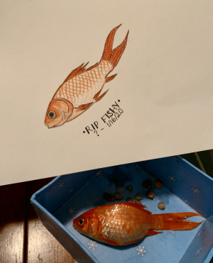 My neighbour threw out one of their pet fish in the middle of the driveway. Here's a tribute I made for Fishy. I gave him the proper burial he deserved.: My neighbour threw out one of their pet fish in the middle of the driveway. Here's a tribute I made for Fishy. I gave him the proper burial he deserved.