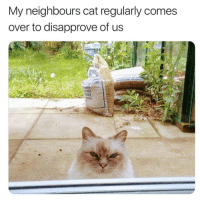 Lol, Grumpy Cat, and Cat: My neighbours cat regularly comes  over to disapprove of us Lol 😂