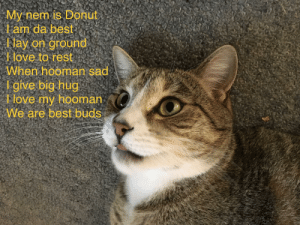 Love, Best, and Sad: My nem is Donut  l an da best  Nay on ground  Jove to rest  When hooman sad  l-give big hug  love my hooman  We are best buds Donut Da Cat