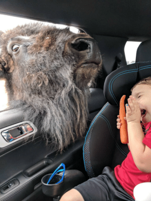 Bison, Day, and Nephew: My nephew met a bison the other day