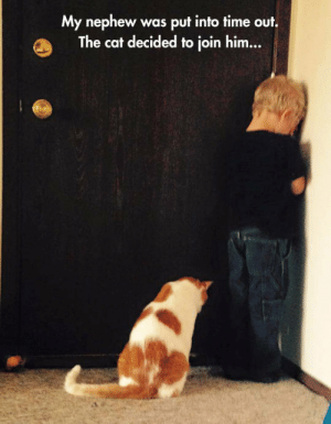 lolzandtrollz:  Bowing His Head In Solidarity: My nephew  The cat decided to join him...  was put into time out. lolzandtrollz:  Bowing His Head In Solidarity