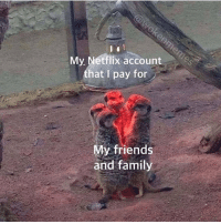 oceanicspooks:  sylvansie:  whichwitchiswich:  detailed-salt:  bestviralposts: source/credit tag yourself i'm a meerkat   our entire family   Third option: I'm a meerkat who pays half of the fee.   Fourth option: I pay for the Netflix, my parents pay for the Hulu- it's a barter system boys 👨‍🌾  : My Netflix account  that I pay for  My friends  and family oceanicspooks:  sylvansie:  whichwitchiswich:  detailed-salt:  bestviralposts: source/credit tag yourself i'm a meerkat   our entire family   Third option: I'm a meerkat who pays half of the fee.   Fourth option: I pay for the Netflix, my parents pay for the Hulu- it's a barter system boys 👨‍🌾