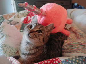 My new kitten Poof and her bff Mr Narwhal: My new kitten Poof and her bff Mr Narwhal