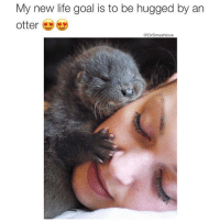 I've heard that the sensation is otterworldly ☺️😂😂😂 (@yourfavoriteexgf 👈): My new life goal is to be hugged by an  otter  @Drsmashlove I've heard that the sensation is otterworldly ☺️😂😂😂 (@yourfavoriteexgf 👈)