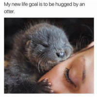 Dank, 🤖, and Otter: My new life goal is to be hugged by an  otter. Sooo cute 😍❤️