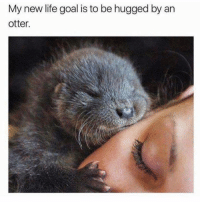 Memes, 🤖, and Otter: My new life goal is to be hugged by an  otter. Sooo cute 😍❤️