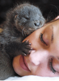 My new life goal is to be hugged by an otter. https://t.co/Z6OOLh5ZWz: My new life goal is to be hugged by an otter. https://t.co/Z6OOLh5ZWz