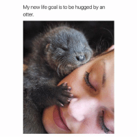 them eyelashes tho: My new life goal is to be hugged by an  otter. them eyelashes tho