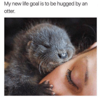 Lifes Goals: My new life goal is to be hugged by an  otter.