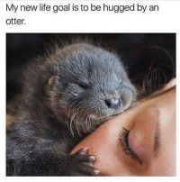Goals: My new life goal is to be hugged by an  otter. Goals