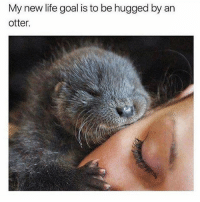Funny, Life, and Goal: My new life goal is to be hugged by an  otter. Follow my backup @petroom