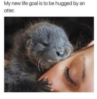 So cute 😍: My new life goal is to be hugged by an  otter. So cute 😍