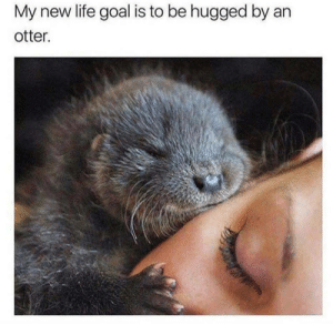 She Otter be pretty happy about this hug. by RePotSirKay FOLLOW 4 MORE MEMES.: My new life goal is to be hugged by an  otter. She Otter be pretty happy about this hug. by RePotSirKay FOLLOW 4 MORE MEMES.