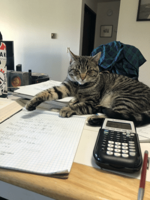 My new math tutor is not much help, he keeps trying to chew on my pencil.: My new math tutor is not much help, he keeps trying to chew on my pencil.