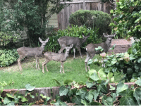My new neighbor! Heard some noise next door from my backyard, took a peek and see this cute family of four: My new neighbor! Heard some noise next door from my backyard, took a peek and see this cute family of four