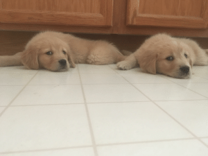 Too Much, Zelda, and New: My new pups Zoey and Zelda are just too much alike