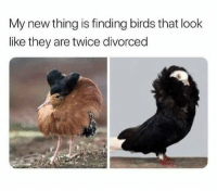 Birds, Humans of Tumblr, and They: My new thing is finding birds that look  like they are twice divorced