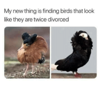 Birds, They, and Thing: My new thing is finding birds that look  like they are twice divorced