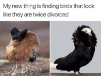 Birds, Photos, and They: My new thing is finding birds that look  like they are twice divorced The accuracy of these bird photos..