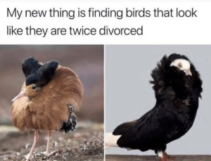 Dank, Memes, and Target: My new thing is finding birds that look  like they are twice divorced The accuracy of these bird photos.. by patrickj32 MORE MEMES