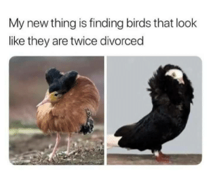 Dank, Memes, and Target: My new thing is finding birds that look  like they are twice divorced When your 8th husband disappears under suspicious circumstances by despisesunrise MORE MEMES