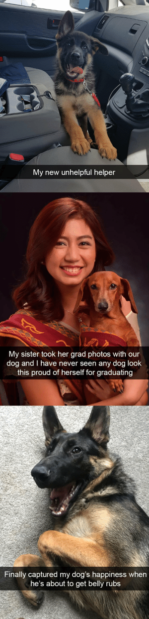 Dogs, Target, and Tumblr: My new unhelpful helper   My sister took her grad photos with our  dog and I have never seen any dog look  this proud of herself for graduating   Finally captured my dog's happiness when  he's about to get belly rubs More dog snapsvia @animalsnaps​