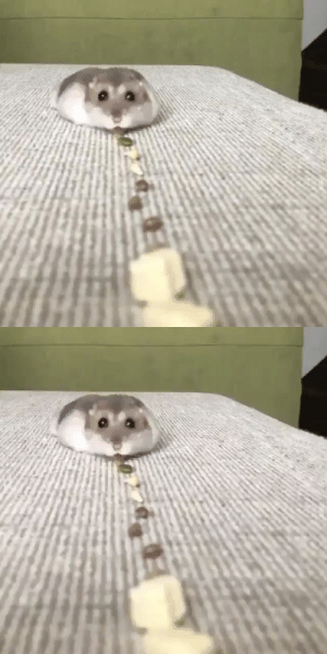 My new vacuum works well 🐹😂via @sou_ham: My new vacuum works well 🐹😂via @sou_ham