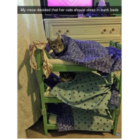 @funny is a must follow: My niece decided that her cats should sleep in bunk beds @funny is a must follow