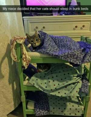 Cats, Cute, and Target: My niece decided that her cats should sleep in bunk beds paprika: this is so cute!