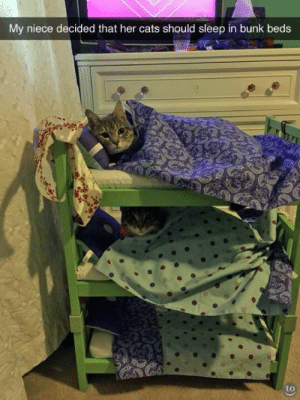 beds: My niece decided that her cats should sleep in bunk beds  to