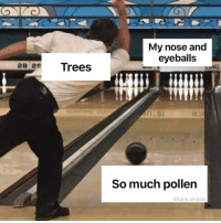 Funny, Head, and Scratch: My nose and  eyeballs  28 25  Trees  NG  So much pollen  @tank.sinatra I want to take my eyeballs out of my head and scratch them so hard