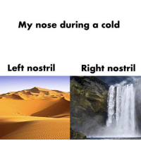 Cold, Nose, and Right: My nose during a cold  Left nostril  Right nostril