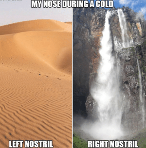 Dank, Memes, and Reddit: MY NOSE DURING A COLD  RIGHT NOSTRIL  LEFT NOSTRIL Lay on your side and it switches to the other one by Scaulbylausis FOLLOW 4 MORE MEMES.