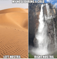 """Memes, Http, and Cold: MY NOSEDURINGA COLD  LEFT NOSTRIL  RIGHT  NOSTRIL <p>Lay on your side and it switches to the other one via /r/memes <a href=""""http://ift.tt/2F9slAv"""">http://ift.tt/2F9slAv</a></p>"""