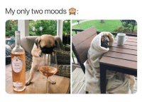 60 Funny Animals Memes For You If You Desperately Need A Laugh: My only two moods  ROSE 60 Funny Animals Memes For You If You Desperately Need A Laugh
