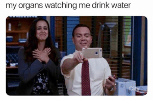 Water, Dank Memes, and City: my organs watching me drink water  City Just drank water.