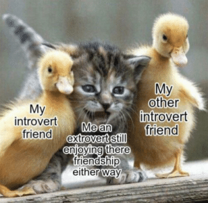 Introverts are cool: My  other  introvert  friend  Мy  introvert  friend extrovert still  Me an  enjoying there  friendship  either way Introverts are cool