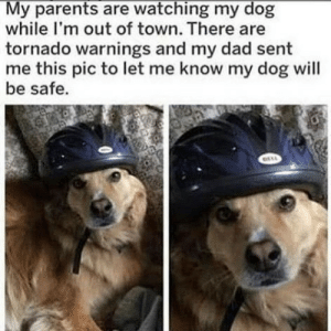 Safety first! by ianXjichu MORE MEMES: My parents are watching my dog  while I'm out of town. There are  tornado warnings and my dad sent  me this pic to let me know my dog will  be safe. Safety first! by ianXjichu MORE MEMES