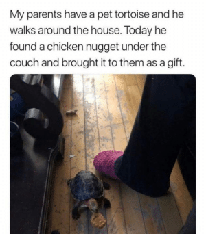 tortoise: My parents have a pet tortoise and he  walks around the house. Today he  found a chicken nugget under the  couch and brought it to them as a gift.
