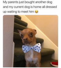 Parents, Home, and Girl Memes: My parents just bought another dog  and my current dog is home all dressed  up waiting to meet him Blessing. Your. Timeline. ✨