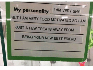 meirl: My personality AM VERY SHY  BUT I AM VERY FOOD MOTIVATED SO I AM  JUST A FEW TREATS AWAY FROM  BEING YOUR NEW BEST FRIEND meirl