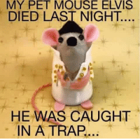 Don't spell PART backwards it's a trap. Thank you, thank you very much. #UnKNOWN_PUNster: MY  PET  MOUSE  ELVIS  DIED LAST NIGHT  HE WAS CAUGHT  IN A TRAP... Don't spell PART backwards it's a trap. Thank you, thank you very much. #UnKNOWN_PUNster