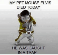 My Buddy's stepdad is a gold mine for terrible memes: MY PET MOUSE ELVIS  DIED TODAY  HE WAS CAUGHT  IN A TRAP My Buddy's stepdad is a gold mine for terrible memes
